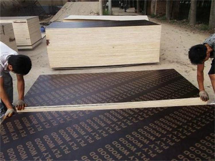 濮阳桥梁多层板图片 服务为先 百顺木业供应