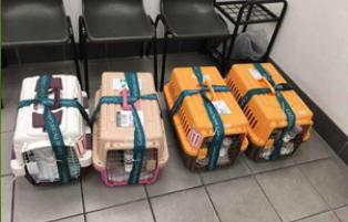 全国优质宠物搬家有保障 飞祥速递供应