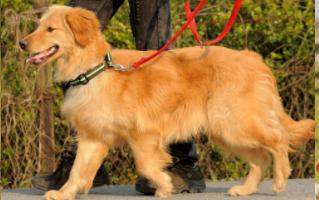 上海专业宠物运输咨询,宠物运输
