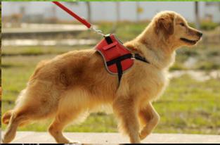 上海宠物运输多少钱 飞祥速递供应