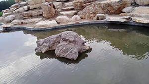 安徽大型湖岸石批发,湖岸石