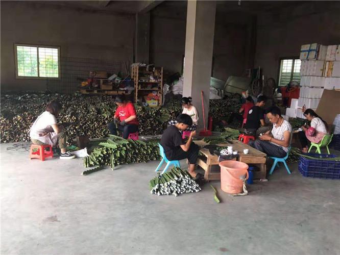 燕窩果種苗 廈門耕泓農業科技供應