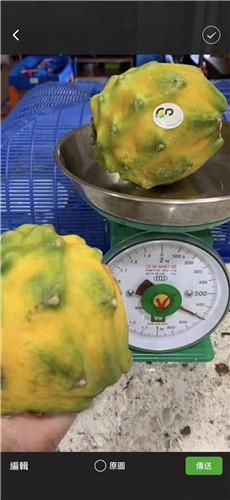 麒麟果果苗種植技術 廈門耕泓農業科技供應
