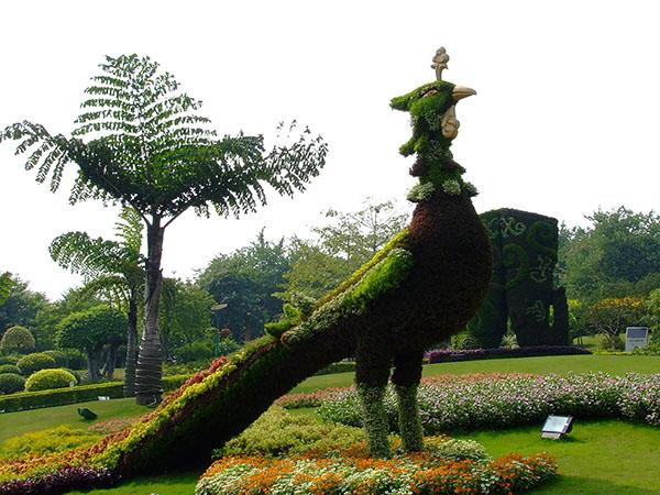 山东五色草造型雕塑 客户至上「河南彩景园艺供应」