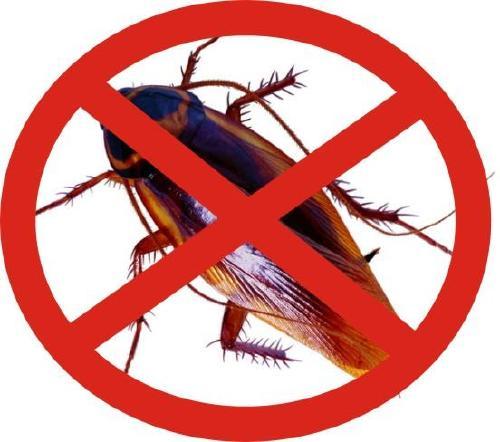 闵行区正规灭蟑螂高品质的选择,灭蟑螂