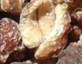 赣州余甘子提取物OEM代加工 南京泽朗生物科技供应