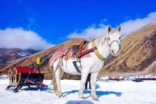 新疆乌鲁木齐市豪华车旅游 诚信互利 运通行供应