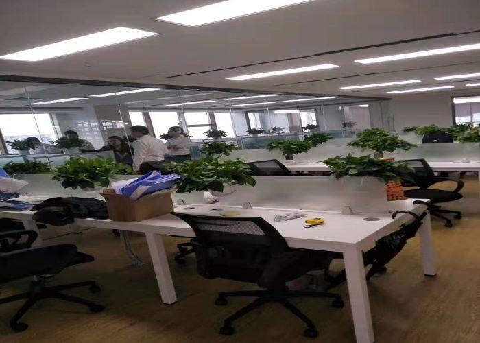 深圳优良植物租赁可量尺定做,植物租赁