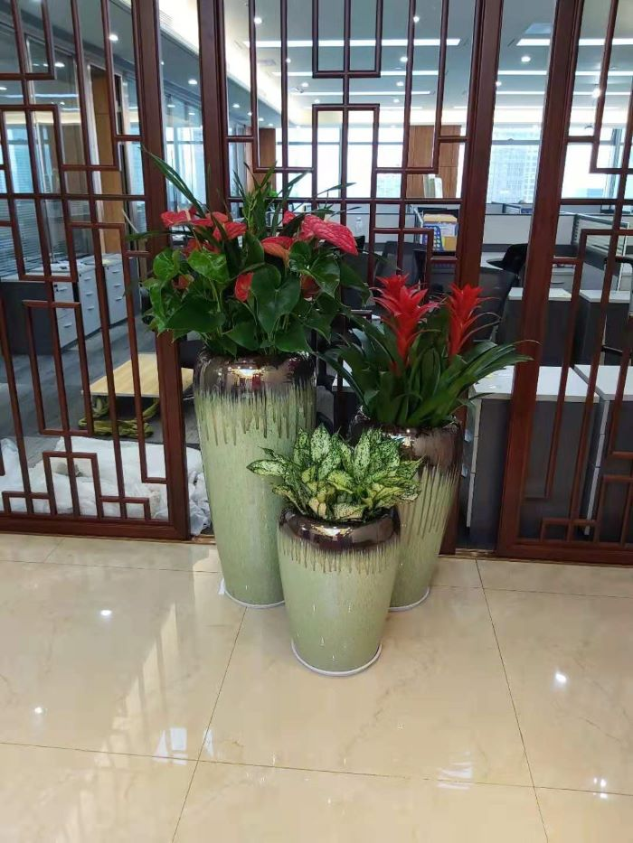 绿植租赁报价 真诚推荐「深圳市绿园轩园林花卉供应」