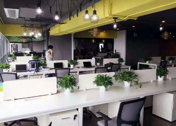 深圳小型绿植租赁厂家,绿植租赁