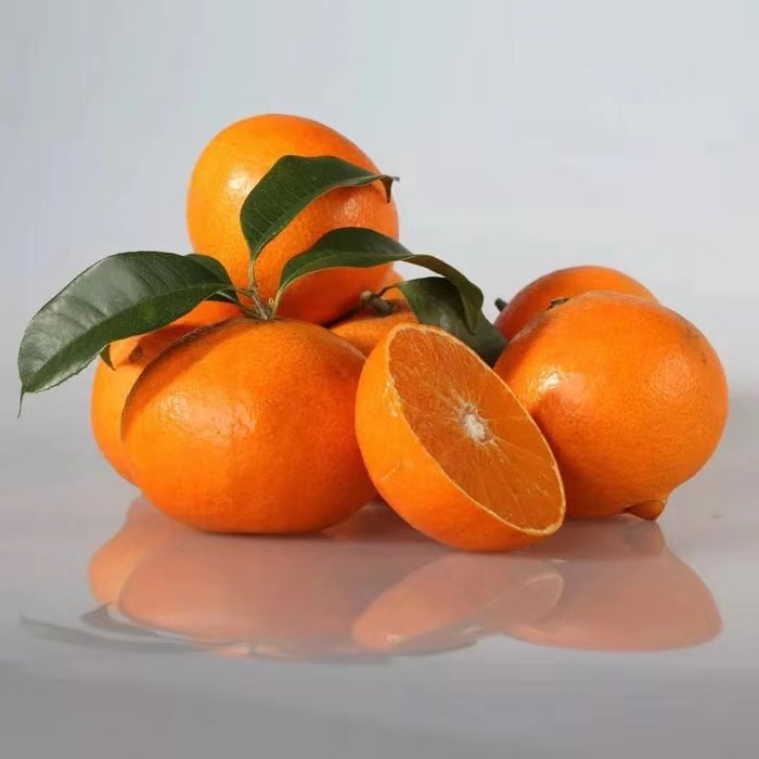 象山红美人柑橘,红美人柑橘