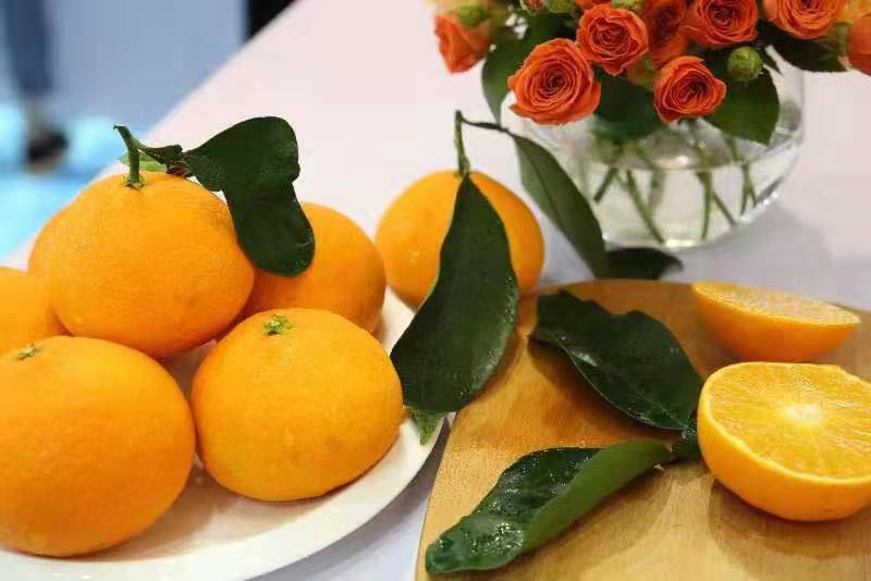 余姚红美人柑橘,红美人柑橘