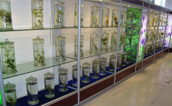 河北浸制标本生产基地,浸制标本
