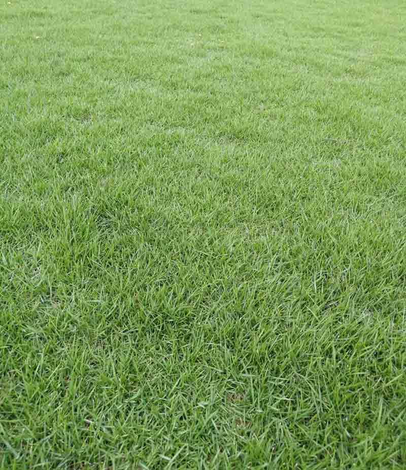 自贡人工草坪多少钱 信息推荐「成都悠时光园艺种植供应」