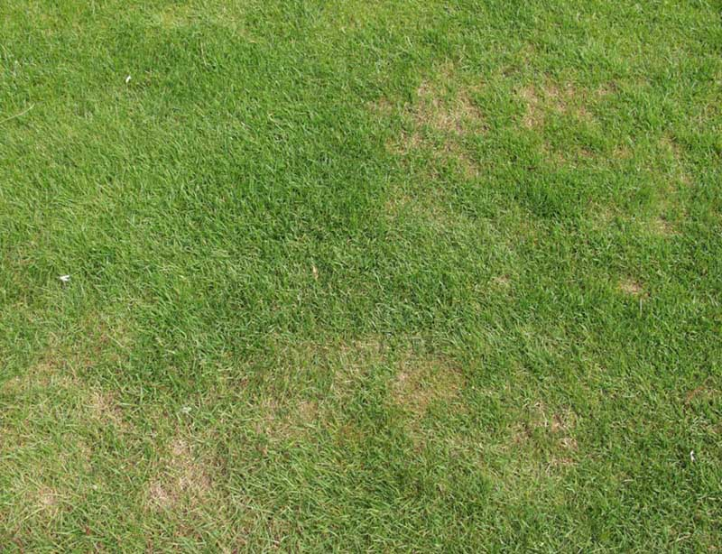 达州百慕大草坪养护,草坪