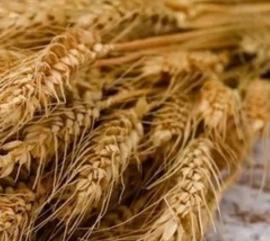 寶山區麥芽提取物OEM貼牌加工 南京澤朗生物科技供應