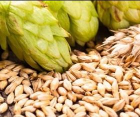 金山區麥芽提取物 南京澤朗生物科技供應