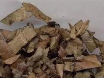 芜湖批把叶 南京泽朗生物科技供应