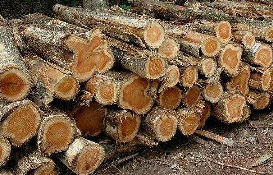 兰州进出口木材多少钱,进出口木材