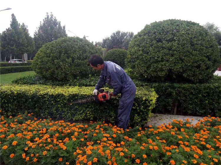 玄武區景觀園林養護公司 誠信經營「南京春之戀景觀工程供應」