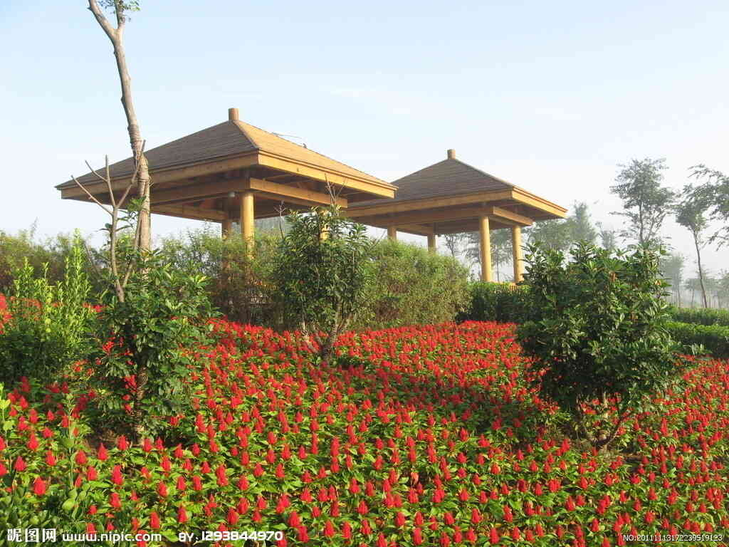 南京附近园林绿植租摆 真诚推荐 南京春之恋景观工程供应