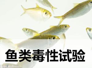 广州亚急性经皮毒性测试,毒性