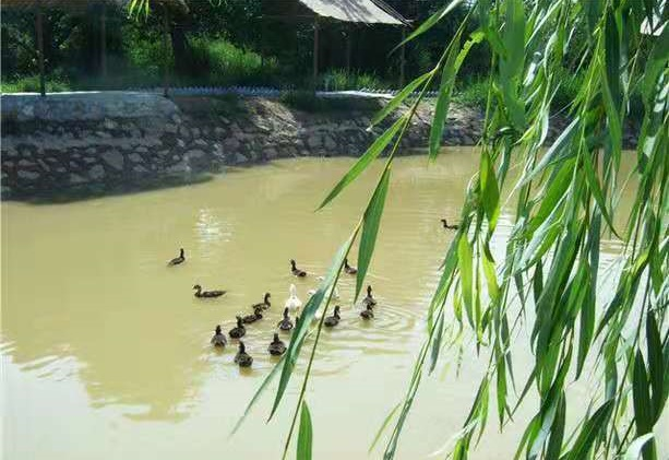 望远度假村钓鱼 值得信赖「永宁县望远镇桃园休闲度假村供应」