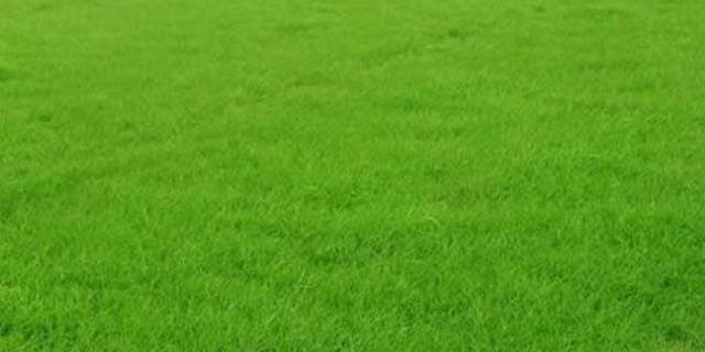 黑龙江门球场人造草坪销售厂家 湖北帝冠体育设施供应
