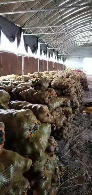 江西粉糯香甜贝贝南瓜供应 创造辉煌「寿光欧瑞农业开发供应」