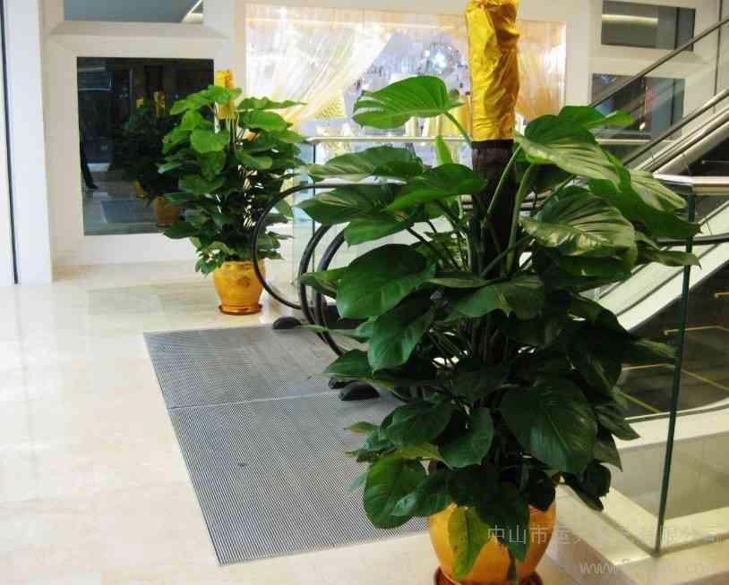 南京石林产业园附近的花卉租赁哪家便宜 创新服务 南京春之恋景观工程供应