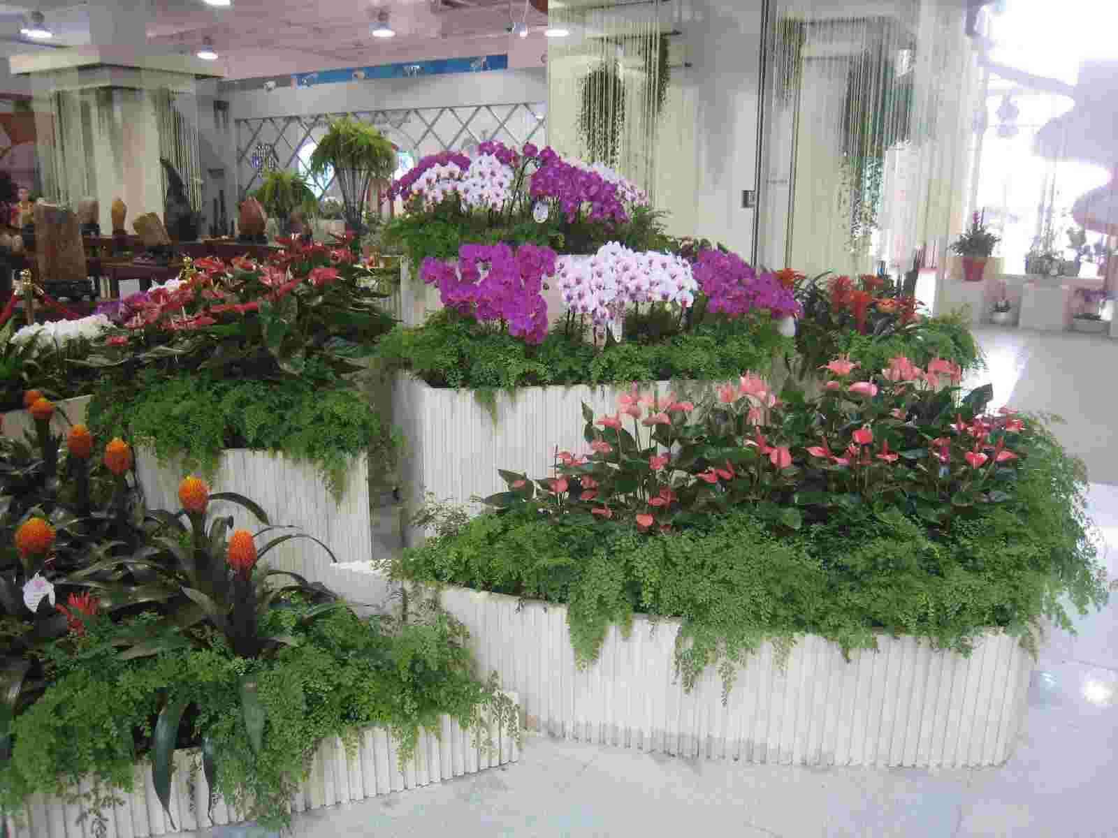 六合区汇文产业园附近的花卉租赁哪家服务好 贴心服务 南京春之恋景观工程供应