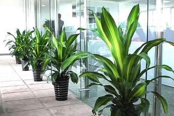 南京石林产业园附近的花卉租赁哪家服务好 客户至上 南京春之恋景观工程供应