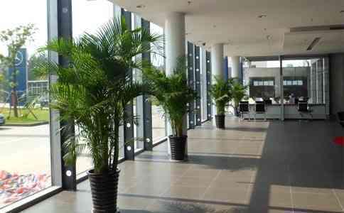 六合区新港工业园附近的花卉租赁哪家好 客户至上 南京春之恋景观工程供应