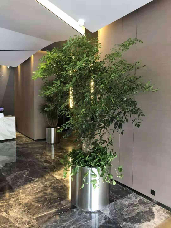 浦口区天灿科技园附近的花卉租赁哪家好 信息推荐 南京春之恋景观工程供应