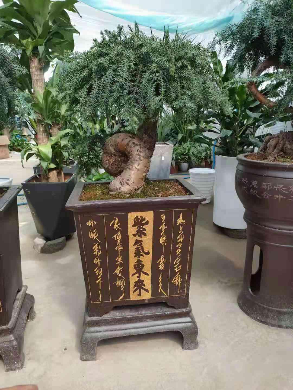 南京六合开发区附近的花卉租赁哪家便宜