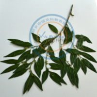 陕西腊叶标本厂,腊叶标本