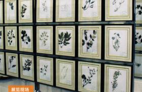 天津腊叶标本生产加工,腊叶标本