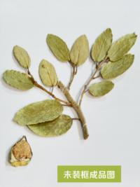 湖南腊叶标本生产加工,腊叶标本