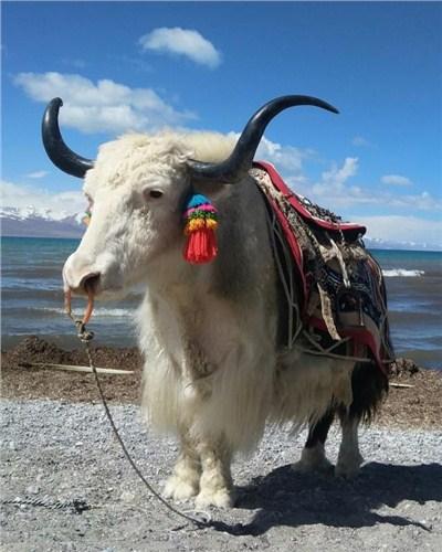 甘肃四日游大环线给您好的建议 青海梅朵纳吉旅游服务供应