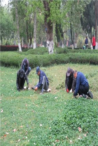 平安口碑好绿化草坪多少钱,绿化草坪