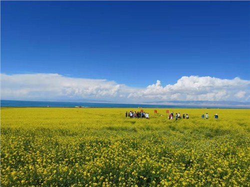 青海湖自由行旅游推荐 海东润青国际旅行社供应