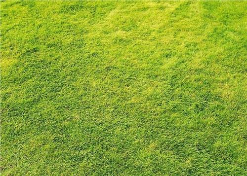 房山白草坪旅游风景区