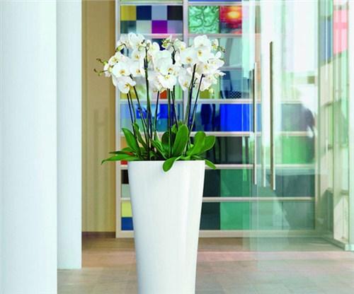 襄阳室内花卉出租,花卉出租