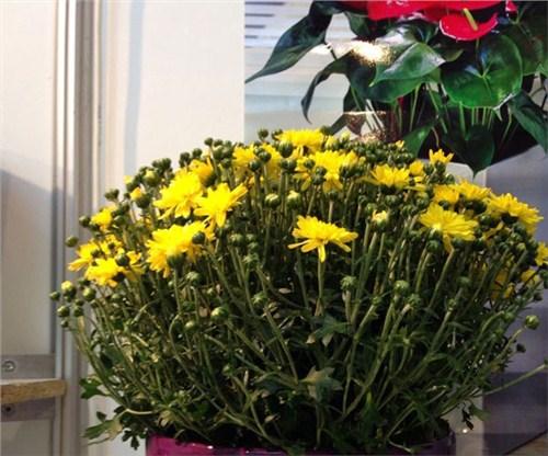 襄阳盆栽花卉出租哪家好,花卉出租
