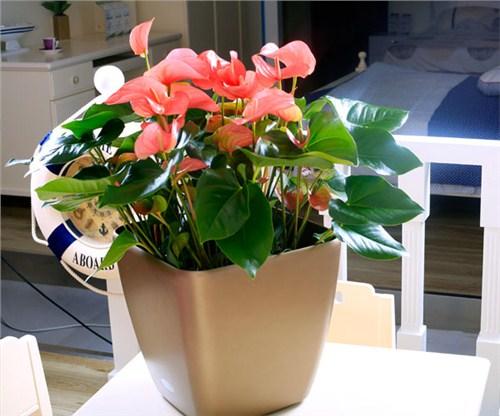孝感園藝花卉出租價格 誠信互利「武漢暗香園藝供應」