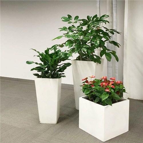 孝感专业植物出租价格,植物出租