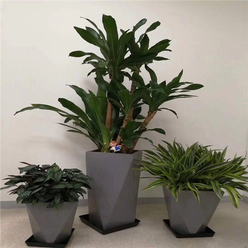 武汉室内植物出租电话,植物出租