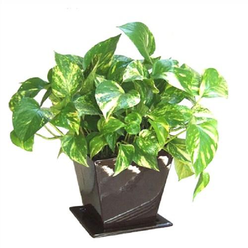 随州室内植物租赁电话 真诚推荐「武汉暗香园艺供应」