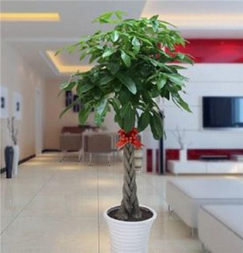 十堰大型植物租赁哪家强,植物租赁