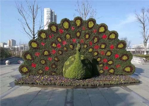 哈尔滨五色草造型生产厂家「河南彩景园艺供应」